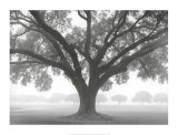 Silhouette Oak Print by William Guion
