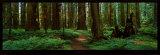 Redwood Kunst av Alain Thomas