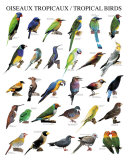 Tropical Birds Posters