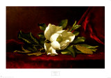 The Magnolia Flower Posters by Martin Johnson Heade