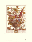 Twelve Months of Flowers, 1730, December Posters by Robert Furber