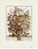 Twelve Months of Flowers, 1730, July Prints by Robert Furber