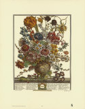 Twelve Months of Flowers, 1730, March Art by Robert Furber