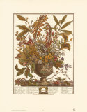Twelve Months of Flowers, 1730, January Prints by Robert Furber