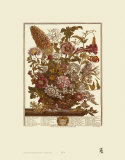 Twelve Months of Flowers, 1730, August Prints by Robert Furber