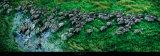 Cebras, cebra equina, Delta de Okavango Póster por Steve Bloom