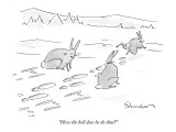 """How the hell does he do that?"" - New Yorker Cartoon Premium Giclee Print by Danny Shanahan"