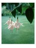 House & Garden - June 1963 Regular Photographic Print by Ralph Bailey