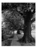 House & Garden - July 1948 Regular Photographic Print by André Kertész