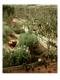 House &amp; Garden - January 1956 Premium Photographic Print by Andr&#233; Kert&#233;sz