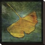 John Golden - Ginkgo III Reprodukce na plátně