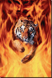 Bengal Tiger Jumping in Flames Stretched Canvas Print