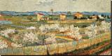 Vincent van Gogh - Peach Blossoms in the Crau, c.1889 Reprodukce na plátně