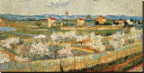 Blühender Pfirsichbaum (Arles), 1888 Leinwand von Vincent van Gogh