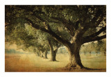 Island Oak Prints by William Guion