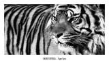 Ojos de tigre Pósters por Xavier Ortega