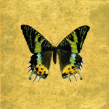 Butterfly on Gold Posters por Joanna Charlotte