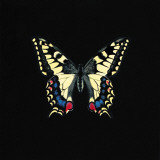 Butterfly on Black Posters by Joanna Charlotte