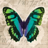 Butterflies II Prints by Tandi Venter