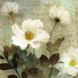 Anemone I Affiches par Keith Mallett