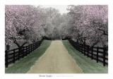 Apple Blossom Lane Posters by Monte Nagler