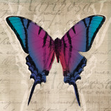 Butterflies IV Prints by Tandi Venter