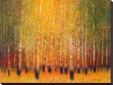 Aspen Glow Stretched Canvas Print by Gary Max Collins
