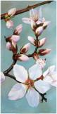 Almond Panel III Art by Donna Wayman