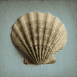 Seashell Study II Prints by Heather Jacks