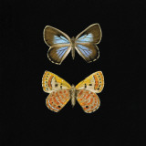 Pair of Butterflies on Black Print by Joanna Charlotte