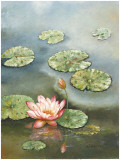 Water Lily with Pink Blossom Prints by W. Cullen