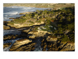 Cypress Point Golf Course, Pebble beach Premium Photographic Print by J.D. Cuban