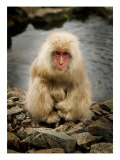Snowy the Snow Monkey Premium Photographic Print by Trey Ratcliff