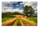 The Gentle Grasses of New Zealand Premium Photographic Print by Trey Ratcliff