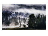 The Forest on the Mega Volcano Premium Photographic Print by Trey Ratcliff