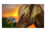 Flaxen Horse at Sunrise Premium Photographic Print by Trey Ratcliff