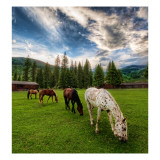 Horses on an Evening Meadow Premium Photographic Print by Trey Ratcliff