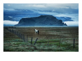 Horse in Landscape Premium Photographic Print by Trey Ratcliff