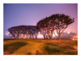 Trees and an Aircraft Carrier in the Fog Premium Photographic Print by Trey Ratcliff