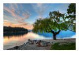 Tree at the Serene Lake Premium Photographic Print by Trey Ratcliff