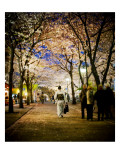 Kimono under the cherry Trees Premium Photographic Print by Trey Ratcliff