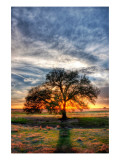 Her Evening Elegance Premium Photographic Print by Trey Ratcliff
