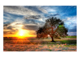A Sunset on a Texas Farm Premium Photographic Print by Trey Ratcliff