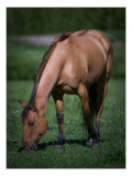 Horse in Field Premium Photographic Print by Trey Ratcliff