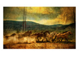 The Old Wild Stampede Premium Photographic Print by Trey Ratcliff