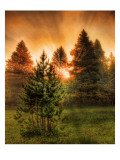The Morning Steam Through the Forest in Yellowstone Premium Photographic Print by Trey Ratcliff