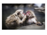 A Gentle Kiss in the Hot Tub Premium Photographic Print by Trey Ratcliff