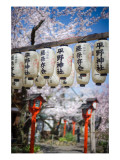 The Lamps and the Sakura Premium Photographic Print by Trey Ratcliff