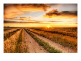 The Lonely Road to the Dinosaur Dig Premium Photographic Print by Trey Ratcliff