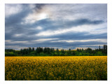 Flowers in the Field Premium Photographic Print by Trey Ratcliff